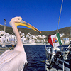 Sailing cruises around the Greece Islands with the photographer Silvia Boccato